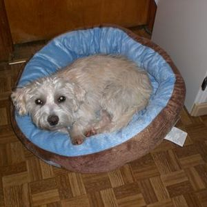 Bow Wow Pet Dog Bed