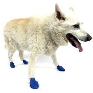 Pawz Dog Boots (Medium)
