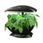 Aerogarden Green Beans Kits