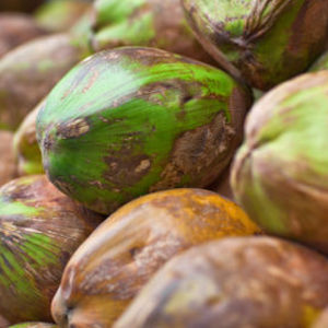 Garden of Wisdom GoW Majik Coconut Revival Cream