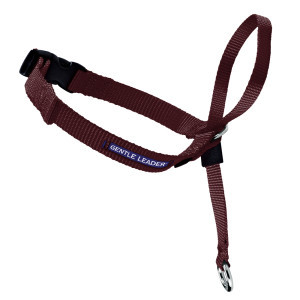 Premier Gentle Leader Harness