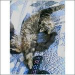 Sanyo - Qualcomm 3g cdma Cell Phone