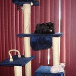 Armakat 6 ft cat tower/condo
