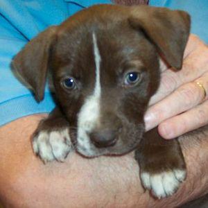 Petsmart Puppy Training Classes