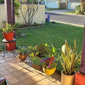 Expert Gardener All-Purpose Plant Food