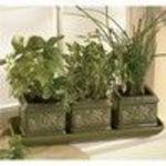 Garden At Home Italian Herb Trio