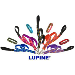 Lupine Leashes and Collars
